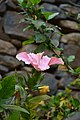 Jardim Botânico da Madeira DSC 0348 (14513269268).jpg