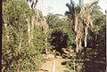 Jardin de Pamplemousses (3001705150).jpg