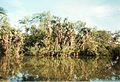 Jardin de Pamplemousses (3005314852).jpg