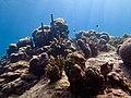 Jardin de corail.jpg