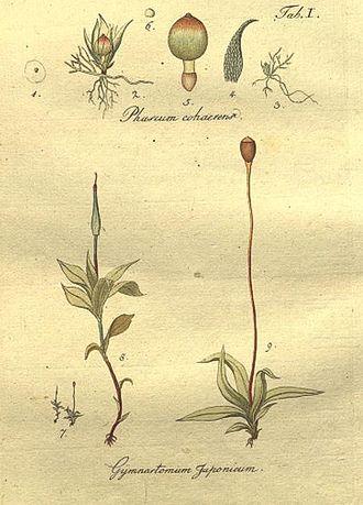Johann Hedwig - Plate from Species Muscorum Frondosorum