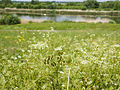 Jubilee River (14346559142).jpg