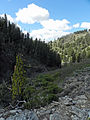 Jumbo Creek Sawtooth NF.JPG