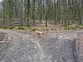 Junction of Tracks - geograph.org.uk - 1167260.jpg