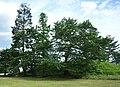 Kabutozuka-kofun 2005-07.jpg