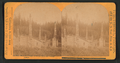 Kasa-an (Kasaan) village, 6 totem poles and Indian homes, from Robert N. Dennis collection of stereoscopic views.png