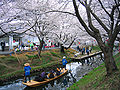 Kawagoe Boating In Shingashi River 1.jpg