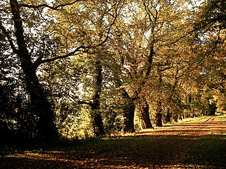 Keele drive during autumn Keele Drive.jpg