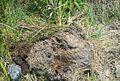Kelapa sawit diserang hama (2).JPG