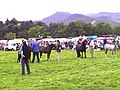 Keswick Agricultural Show - Horse competition - geograph.org.uk - 1816.jpg