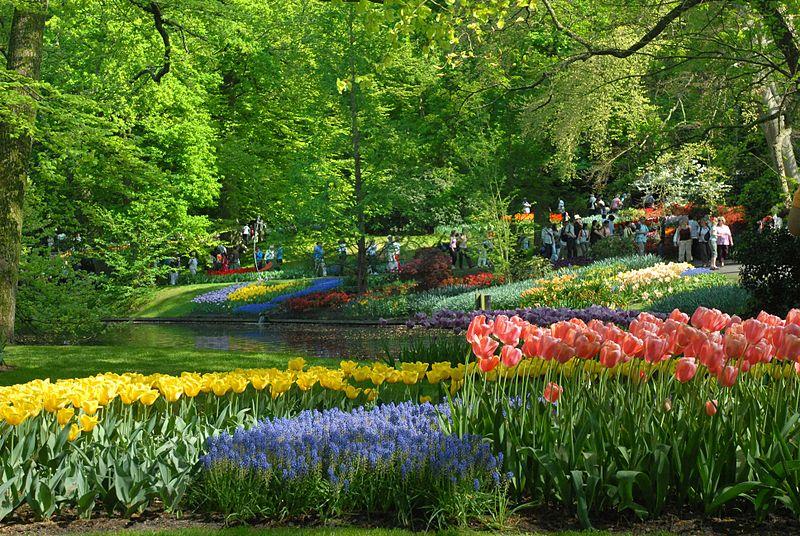 /**جمال الطبيعة في فصل الربيع**\ 800px-Keukenhof-Szmu