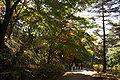 Kobe municipal forest botanical garden07s3872.jpg