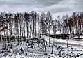 Kolomensky District, Moscow Oblast, Russia - panoramio (35).jpg
