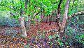 Koromjol- a part of the Sundarbans east wildlife sanctuary.jpg