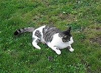 Kot po polowaniu (Aw58).JPG