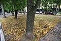 Krasnogorsk-2013 - panoramio (873).jpg