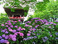 Kumagaya Nougo Temple Bell Tower And Hydrangea.jpg
