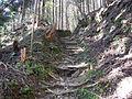 Kumano Kodo Dainichigoe World heritage43.JPG