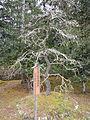 Kumano Kodo Kumano Hongu Taisha World heritage 熊野本宮大社108.JPG