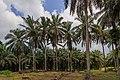 Kunak Sabah Mostyn-Oil-Palm-Museum-03.jpg