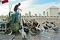 L'art d'agacer des pélicans^ - How to tease pelicans - panoramio.jpg