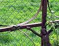 La Vicogne cimetière (croix fer forgé) 1a.jpg