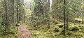 Laajavuori nature trail.jpg