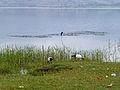 Lac Haïk-Ethiopie-Oiseaux.jpg