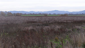 Limnanthes vinculans - Typical habitat for L. vinculans on the Santa Rosa Plain looking east across the Laguna de Santa Rosa floodplain, with the Mayacamas Mountains in the background