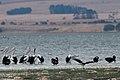 Lake Burrumbeet (24757370716).jpg