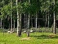 Lampaita Pentala Espoo 180720.jpg