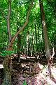 Landschaftsschutzgebiet Turmberggebiet bei Wesseln - Wald.jpg