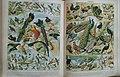 Larousse illustré Augé - planche - oiseaux.jpg