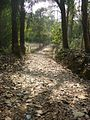 Lawachara National Park Srimongol Sylhet Bangladesh 4.JPG