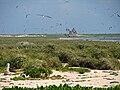 Laysan Island Interior.jpg