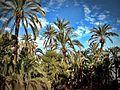 Le jardin de (El-wahi) - panoramio.jpg