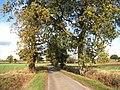 Leavy Oak Lane - geograph.org.uk - 1565518.jpg