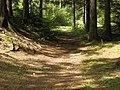 Lesný chodník - panoramio.jpg