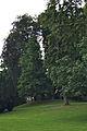 Leuven Sint-Donatuspark I.jpg