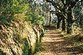 Levada Walk above Santa da Serra (78864606).jpg