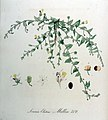 Linaria elatine — Flora Batava — Volume v9.jpg