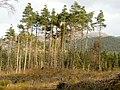 Loch Ard Forest - geograph.org.uk - 1056512.jpg