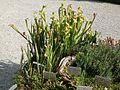 Lorto-botanico-di-padova-2016 28340423396 o 12.jpg