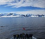 M S Expedition passengers observe Killer Whales (6086429269).jpg