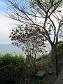 Madeira em Abril de 2011 IMG 1615 (5661423515).jpg