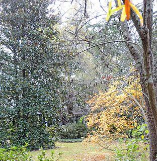 Magnolia (Bennettsville, South Carolina) United States historic place