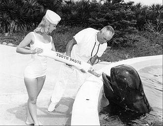 Marineland of Florida - Moby the Whale gets a dental checkup, 1964.