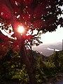 Martins - State of Rio Grande do Norte, Brazil - panoramio (1).jpg