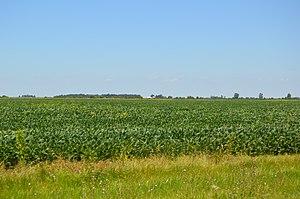 Martinton Township, Iroquois County, Illinois - Fields along U.S. Route 52, southwest of Martinton