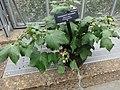 Medicinal Plants - US Botanic Gardens 16.jpg